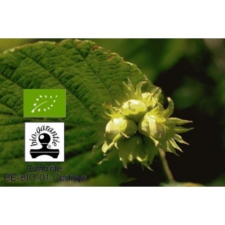 Huile végétale de noisette bio