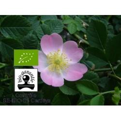 Huile végétale bio rose musquée répare et cicatrise la peau 100 ml