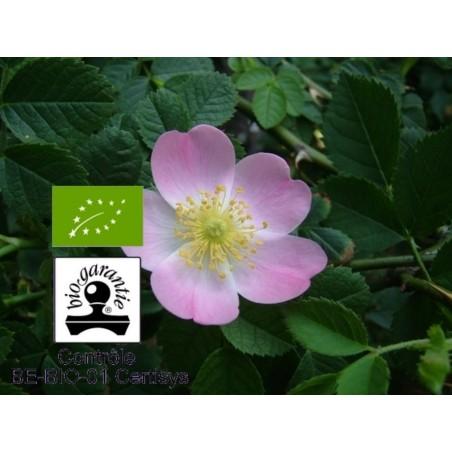 Huile végétale bio rose musquée