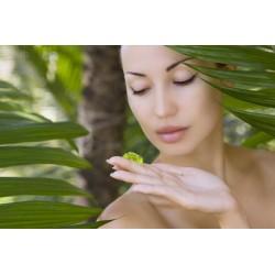 L'Aloe Arborescens :propriétés hydratantes et apaisantes,