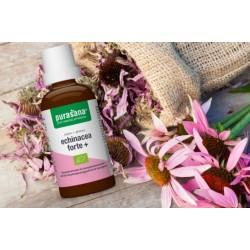 Echinacea forte+ bio Immunité, voix respiratoires et urinaires 100 ml